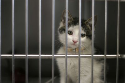 Delaware has become the first no-kill state in the U.S. for animals that enter shelters, according t